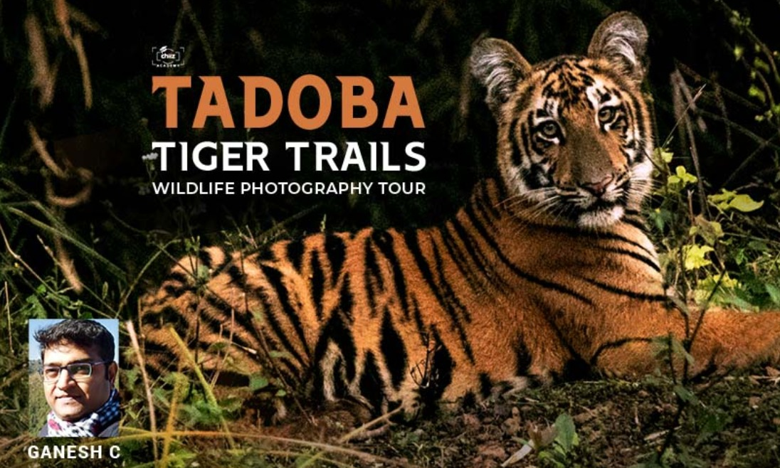 TADOBA WILDLIFE TOUR