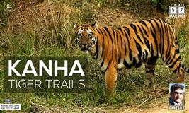 KANHA WILDLIFE PHOTO TOUR