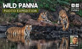 Panna Wildlife Photography Tour
