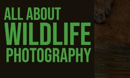All About Wild Life Photography With Avishek Roy