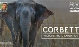 Corbett Photo Expedition