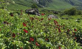 Valley of Flowers Trek Uttarakhand
