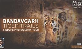 BANDHAVGARH WILDLIFE TOUR