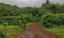 Beginner's Trail at Sanjay Gandhi National Park