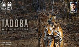 Tadoba Wildlife Photography Tour Nagpur