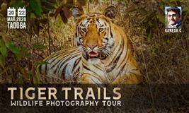 TADOBA WILDLIFE PHOTOGRAPHY TOUR
