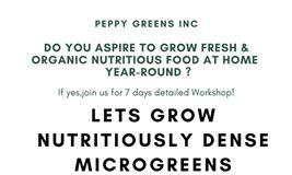 GROW YOUR OWN  ULTIMATE SUPERFOOD -MICROGREENS (step towards healthier & sustainable lifestyle )